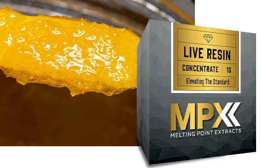 MPX Live Resin Terp Sugar product photo